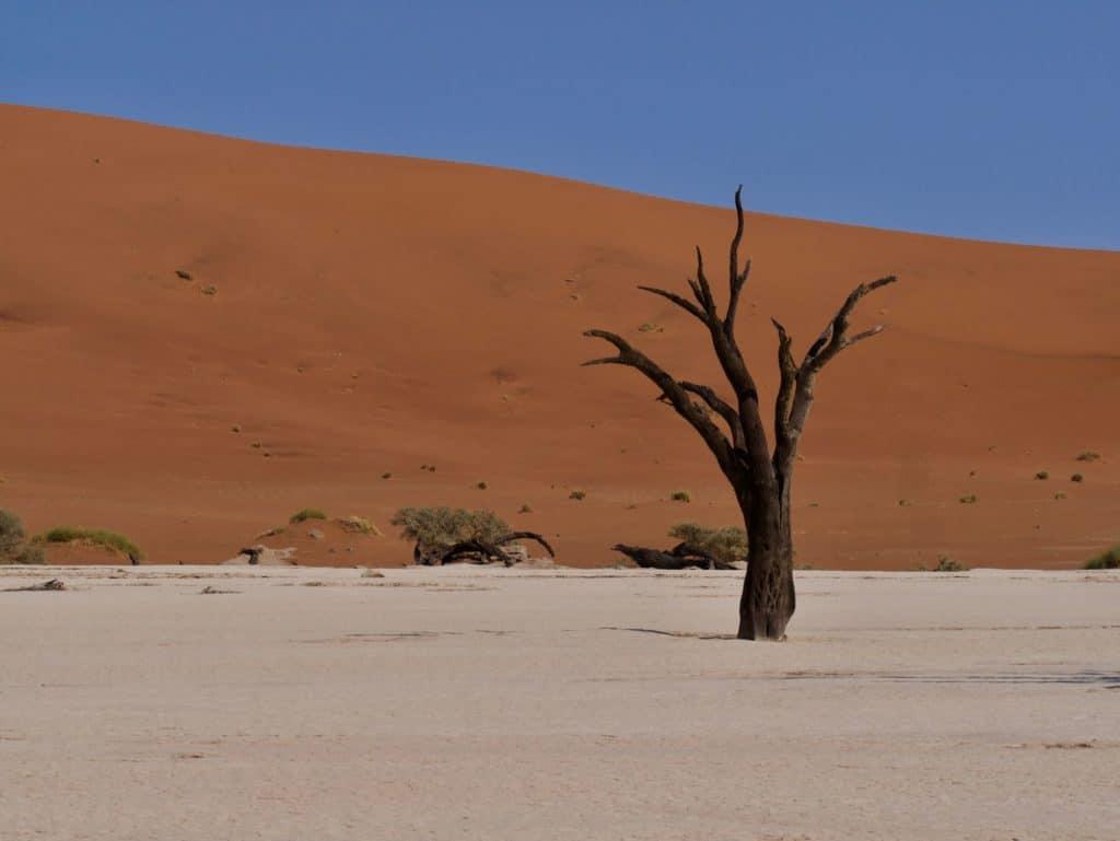 L'arbre le plus célèbre de Dead Vlei