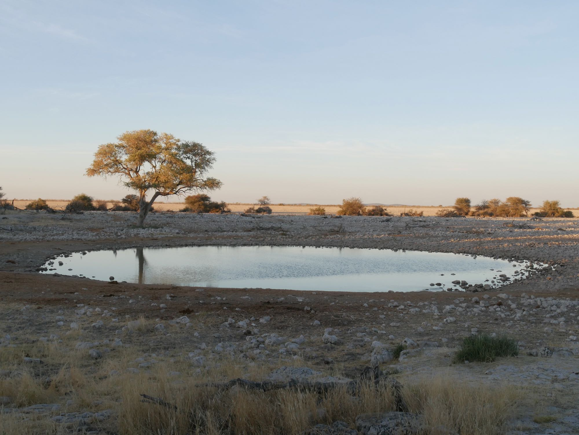 Trou d'eau d'Okaukuejo à Etosha