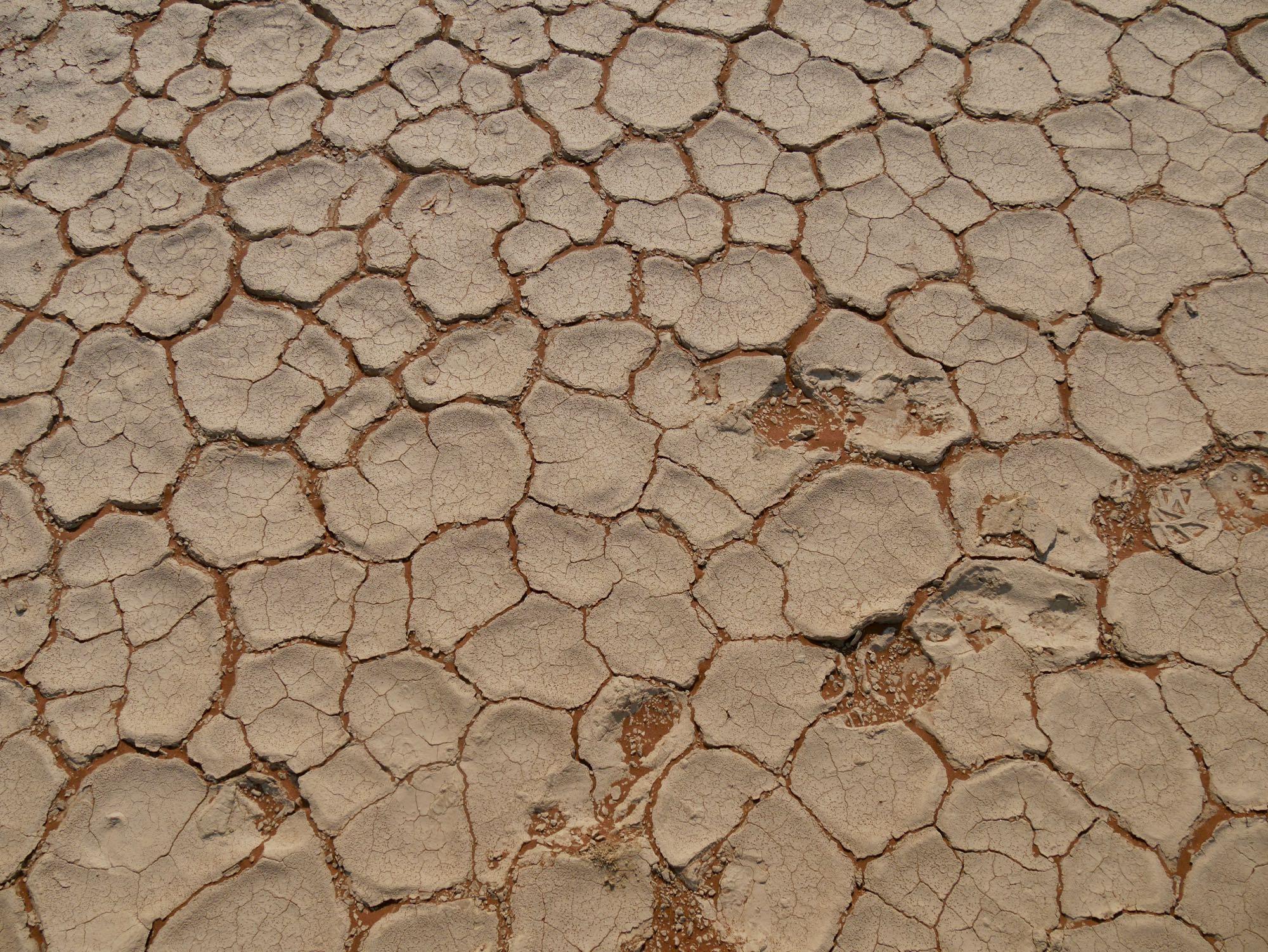 Le sol craquelé de Dead Vlei