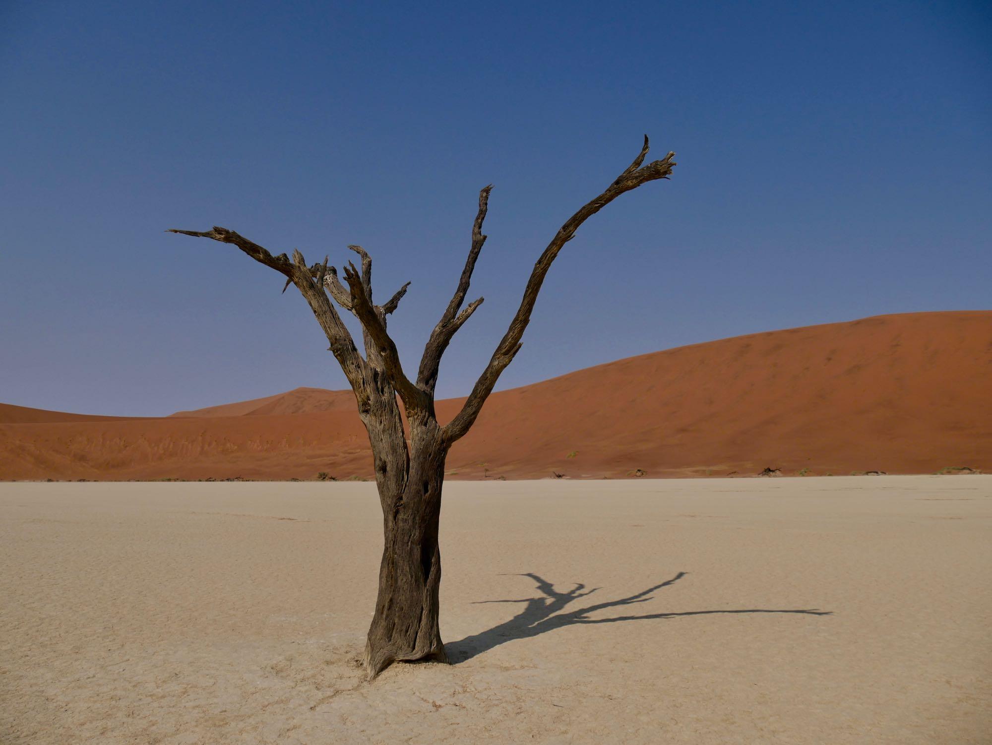 Un arbre mort à Dead Vlei