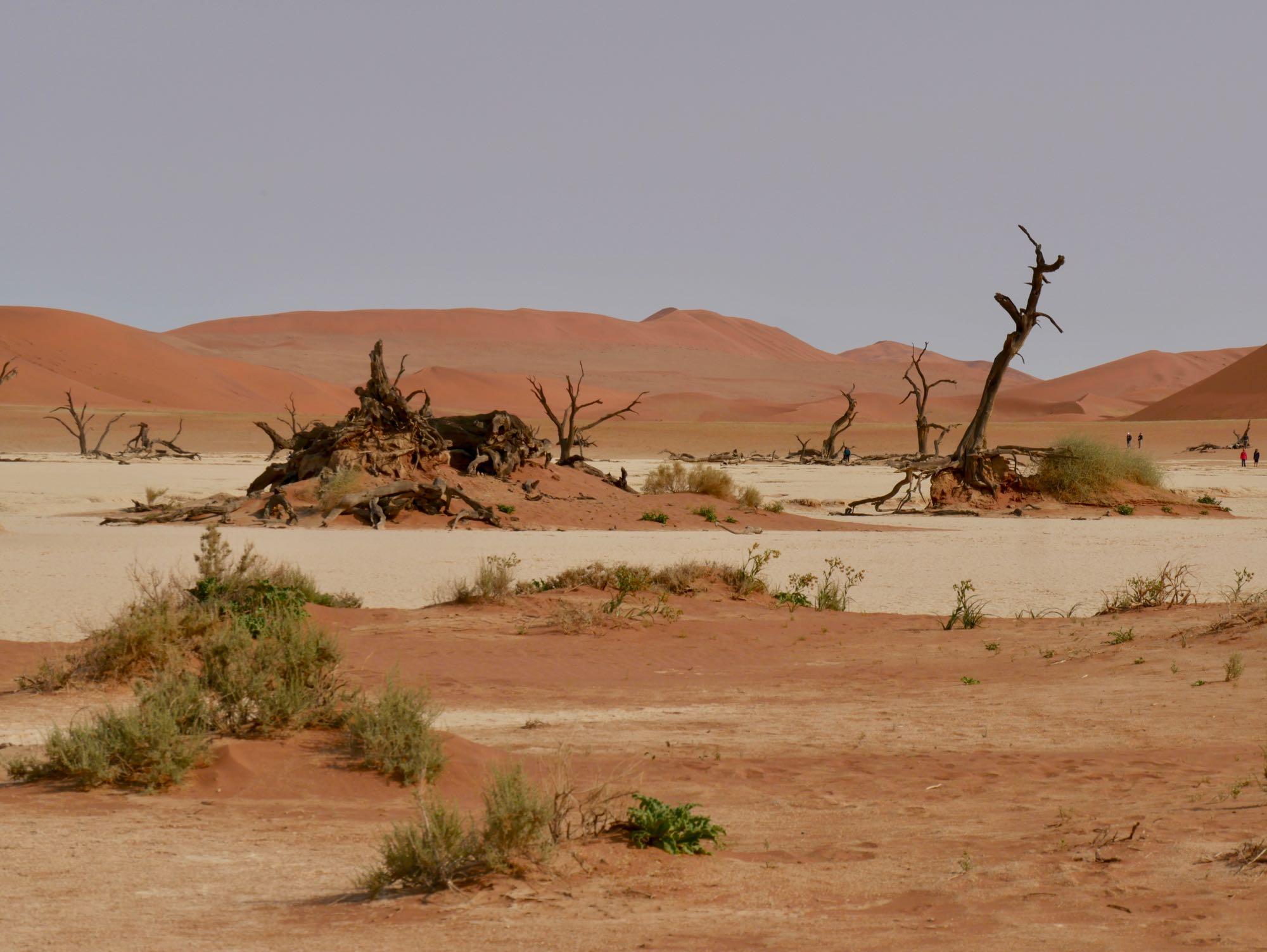 Dead Vlei dans le désert du Namib