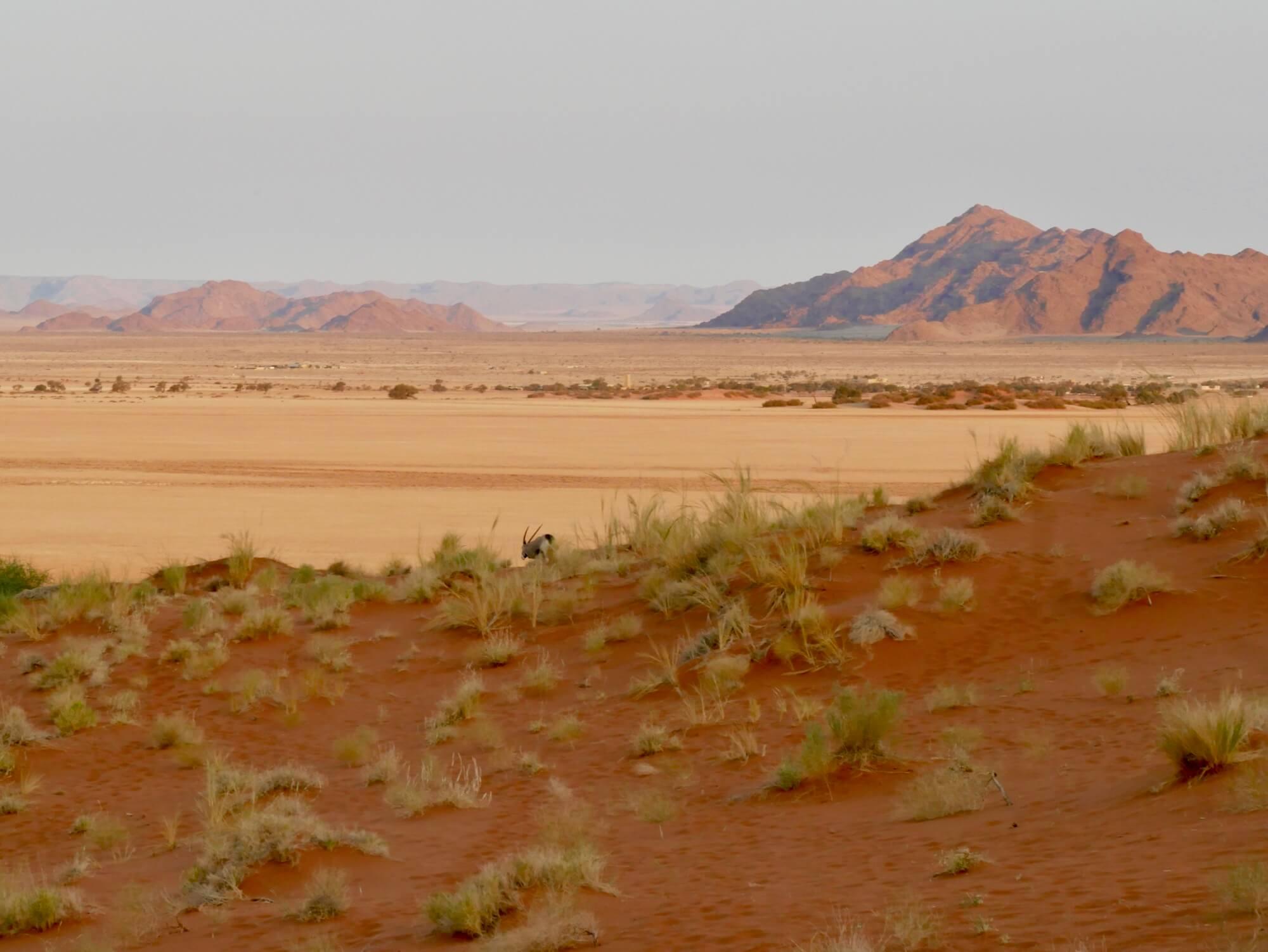 Un oryx à Elim Dune dans le désert du Namib