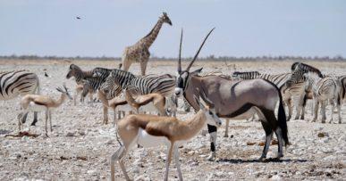 Une diversité incroyable d'animaux à Gemsbokvlakte