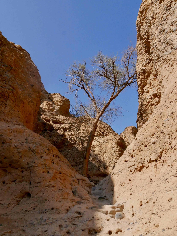 Petit arbre dans le canyon de Sesriem
