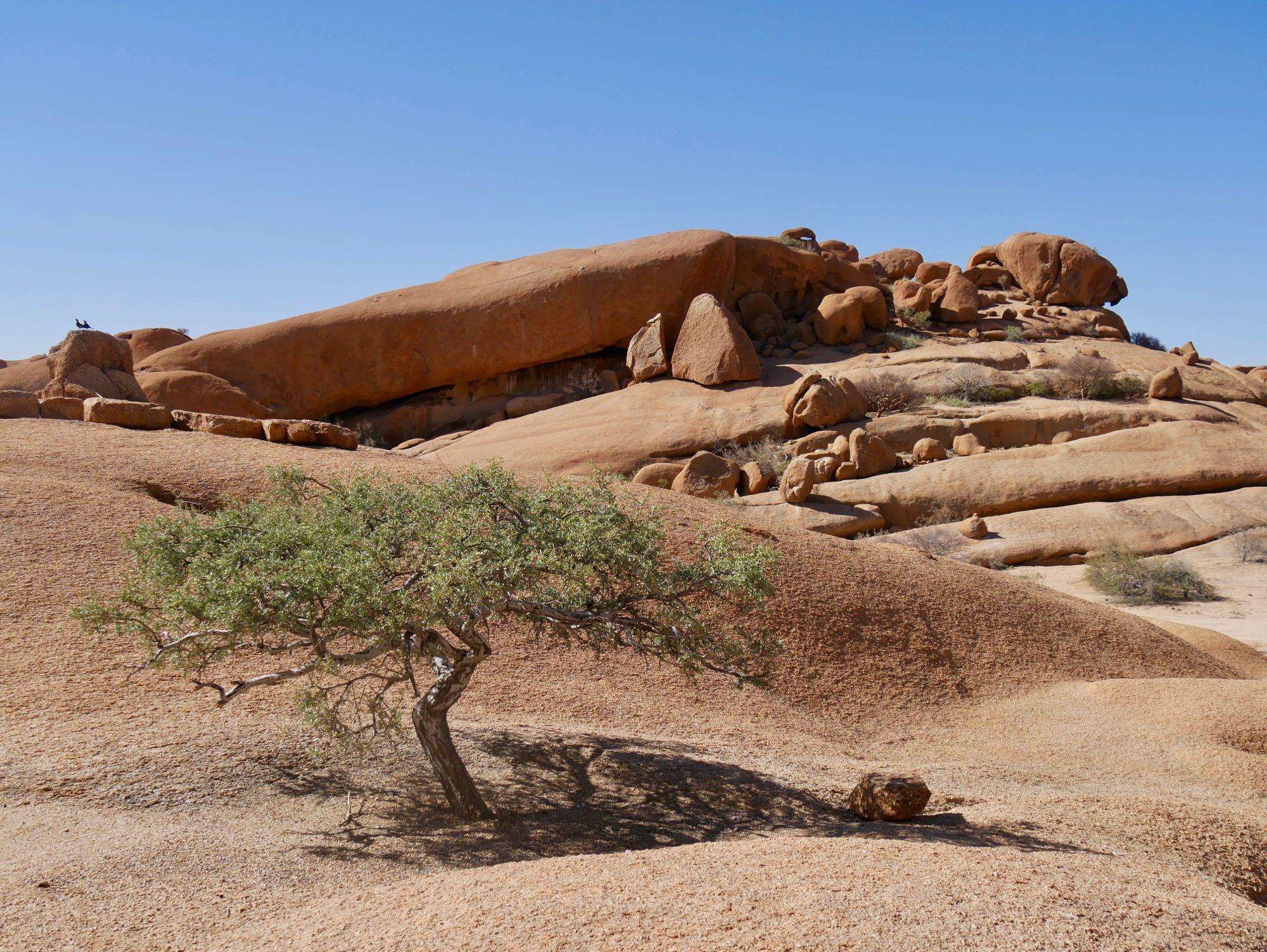 L'arbre du Spitzkoppen Lodge