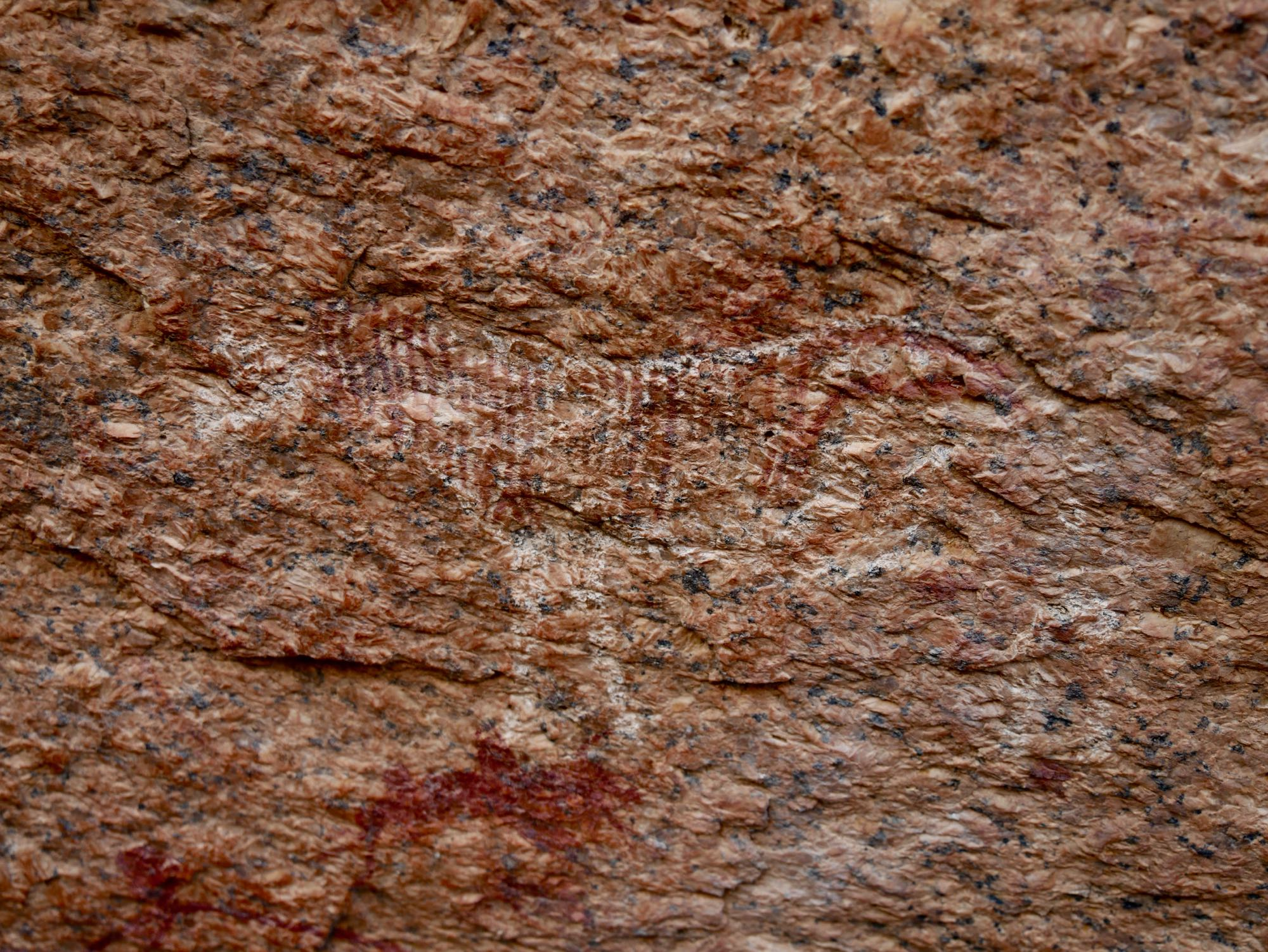 Peinture rupestre de zèbre au Spitzkoppe
