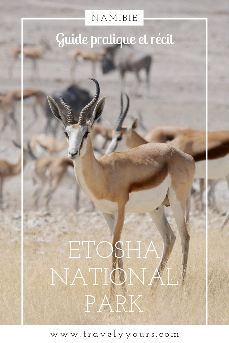 Image d'épingle avec springbok à Etosha National Park
