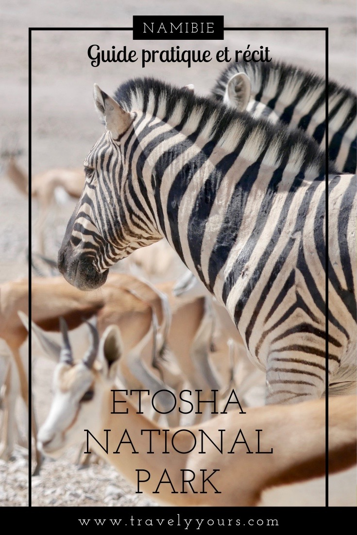 Image d'épingle avec zèbres à Etosha National Park