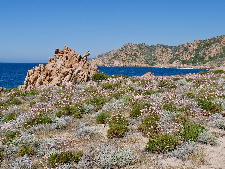 Superbes paysages fleuris lors de la randonnée de Costa Paradiso